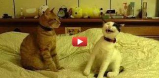 Коты, которые взяли верх над собаками