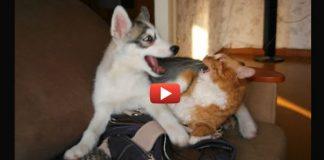 пес пытается подружиться с котом