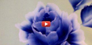 прекрасные цветы за 3 минуты